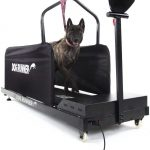 dog runner treadmills