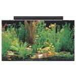 seaclear fish tanks