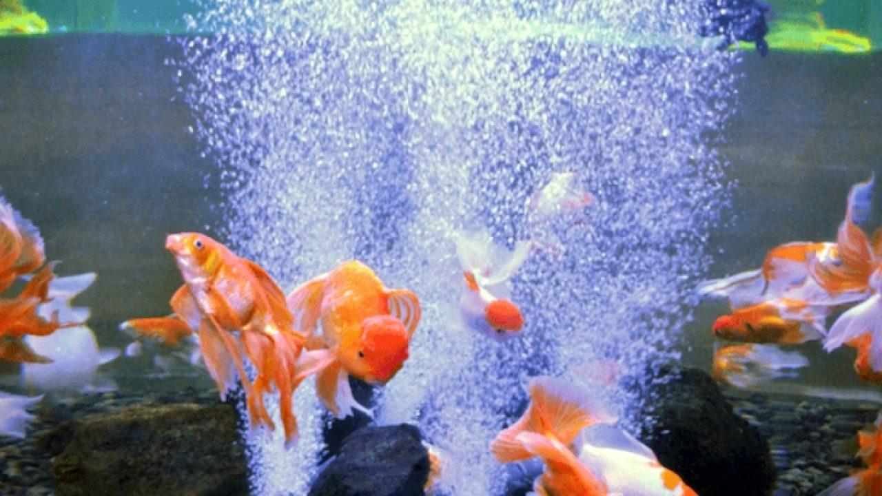 Best Aquarium Air Pumps of 2021