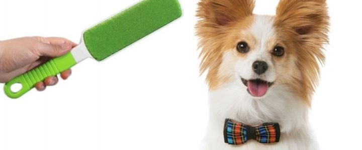 Best Pet Hair Removers of 2021