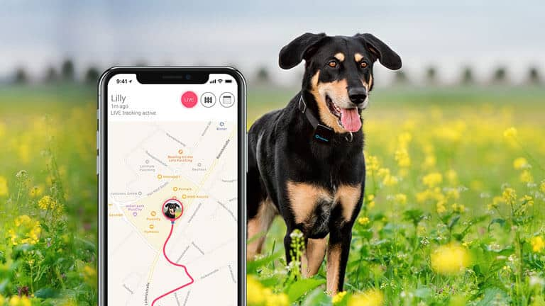 Best Dog Gps Tracker 2021 Best Dog GPS Trackers of 2021 | | Victoria Pets