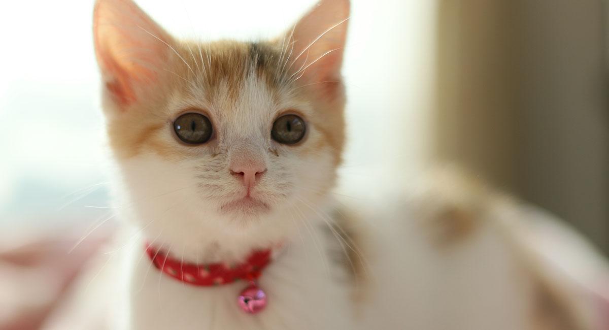 Best Cat Collars of 2021