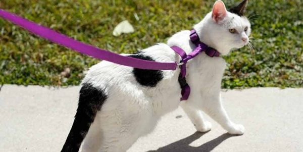 Best Cat Harnesses of 2021