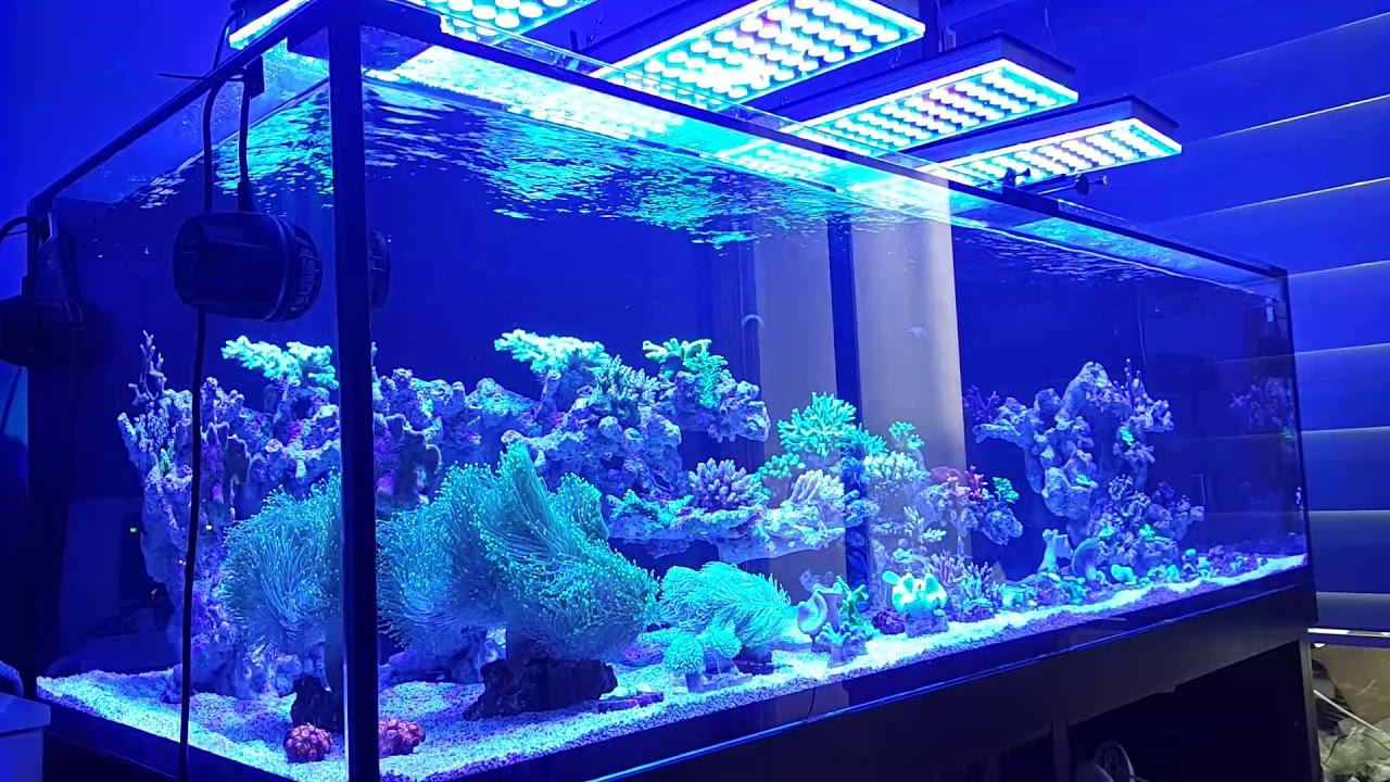 Best Aquarium Lights of 2021