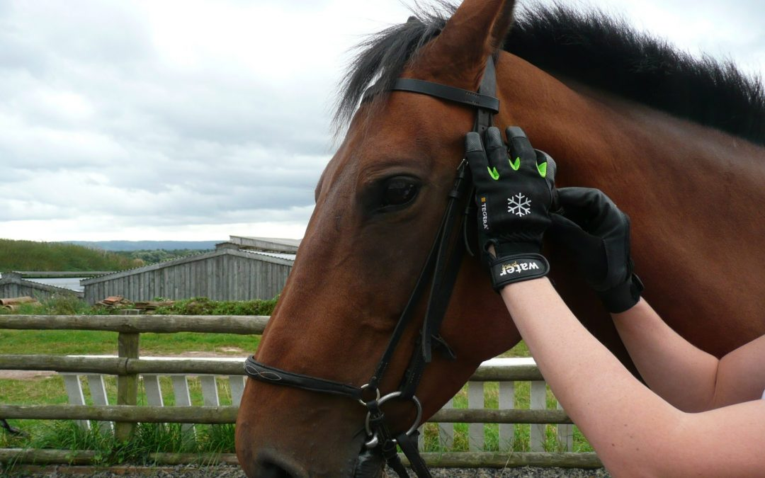 Best Horse Riding Gloves of 2021
