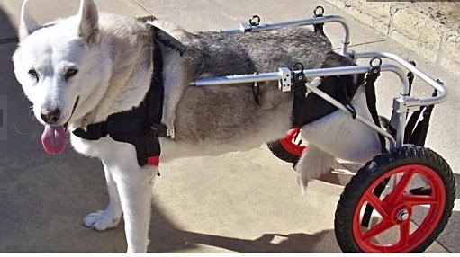 Best Dog Wheelchairs of 2021