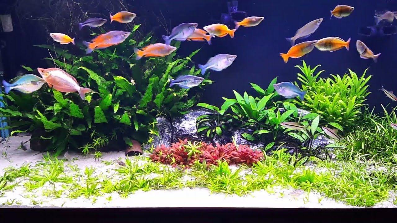 Best Aquarium Sands of 2021