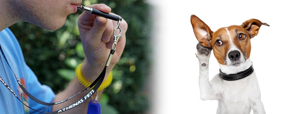 Best Dog Whistles of 2021
