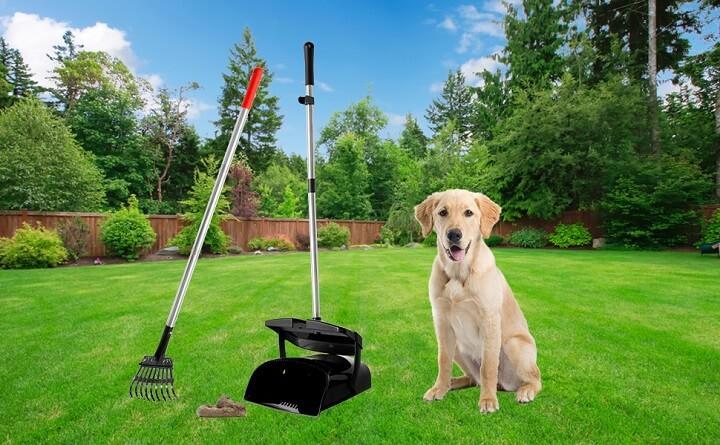 Best Pooper Scooper for Dogs in 2021
