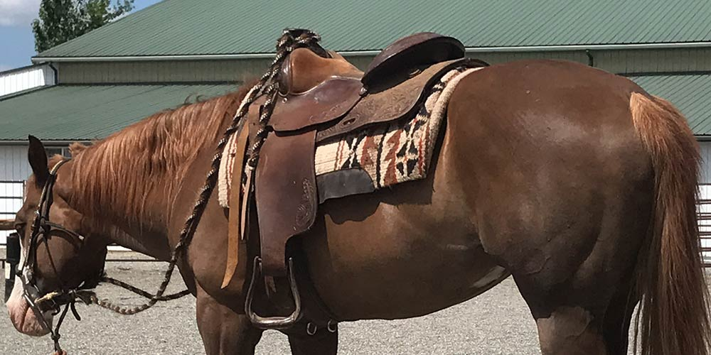 Best Horse Saddle of 2021