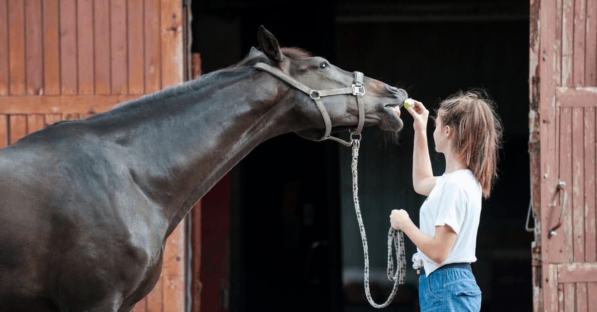 Best Horse Treats of 2021