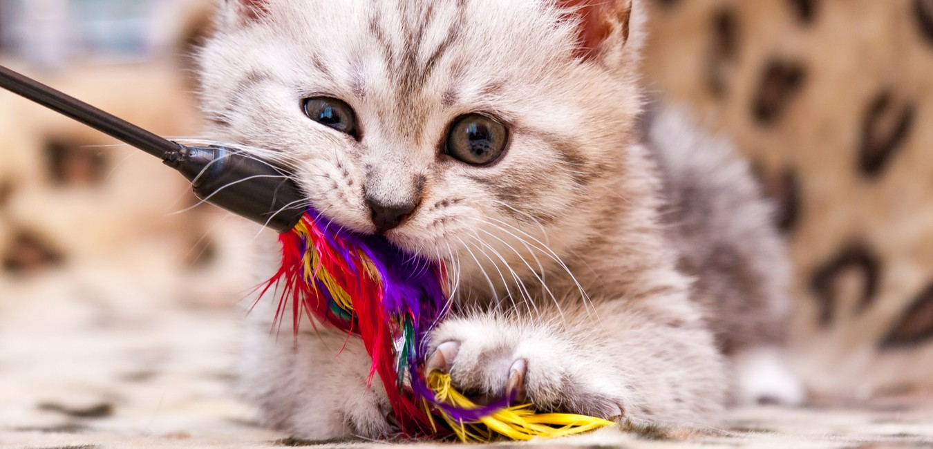 Best Cat Toys of 2021