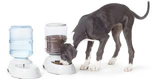 Best Automatic Dog Feeders of 2021