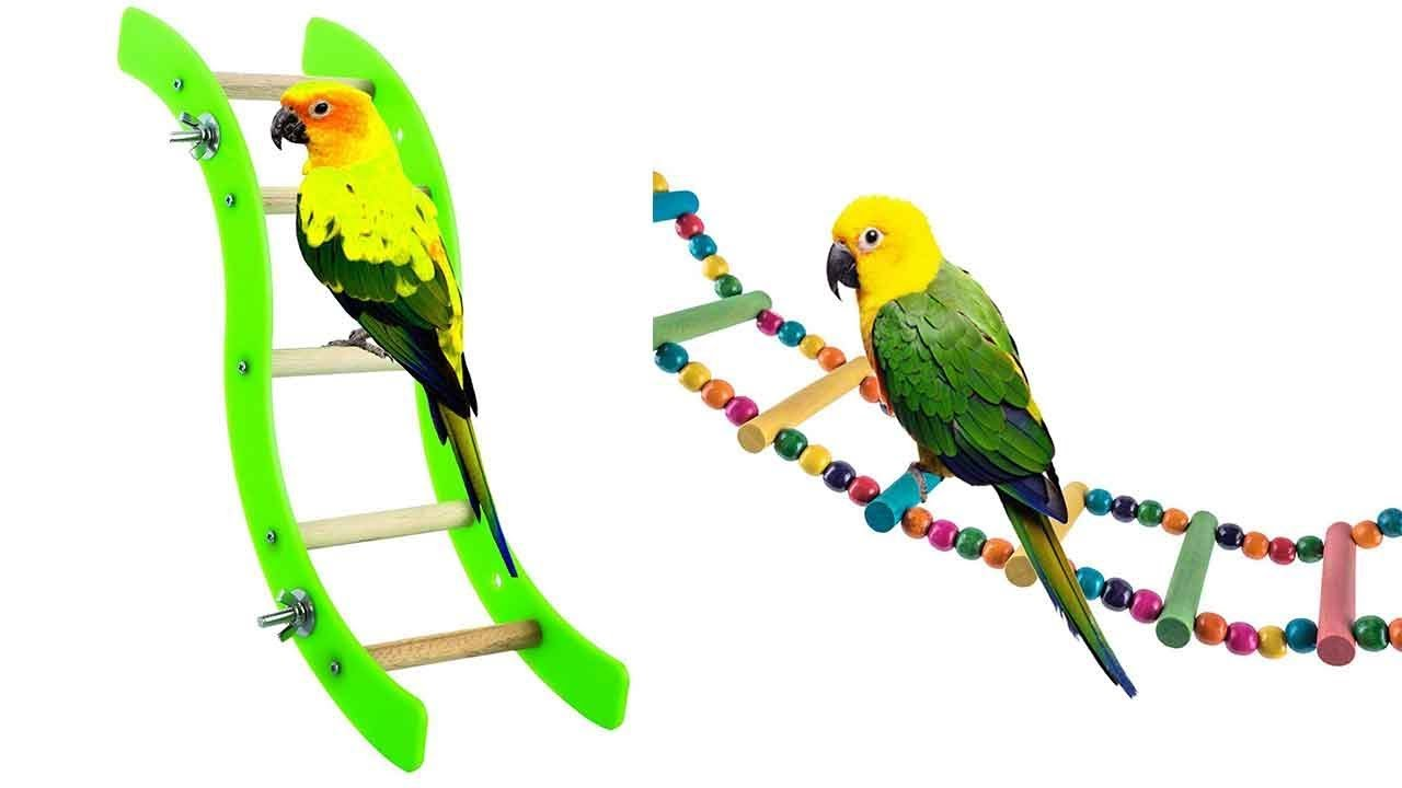 Best Bird Ladders of 2021