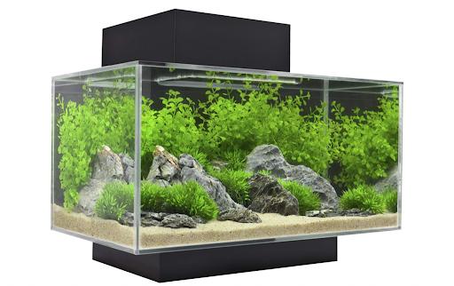 Best Nano Aquariums of 2021