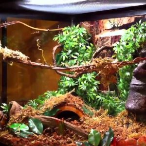 Best Enclosures for Ball Pythons in 2021
