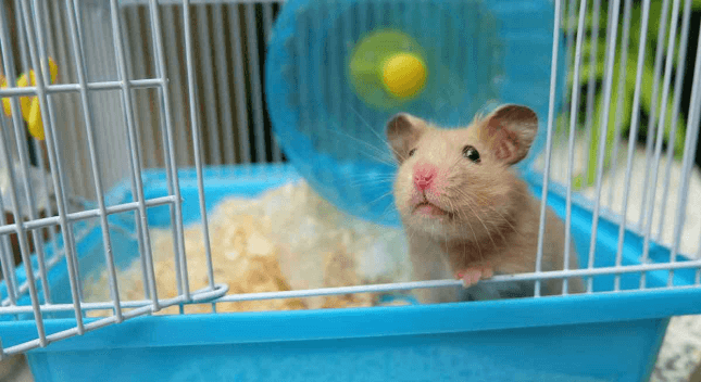 Best Hamster Cages of 2021