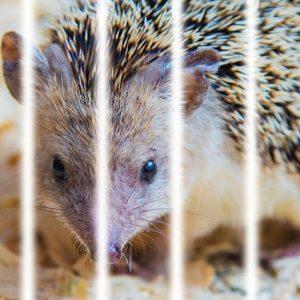 Best Hedgehog Cages of 2021