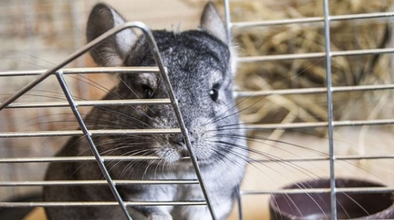 Best Chinchilla Cages of 2021