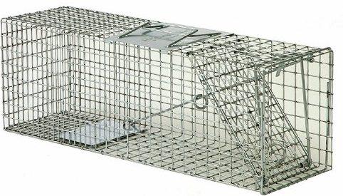 Best Rabbit Traps of 2021