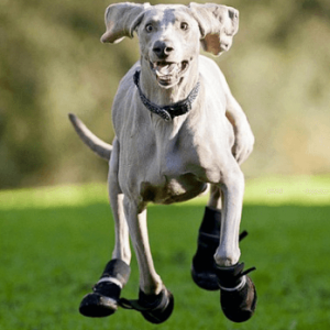 Best Dog Boots of 2021