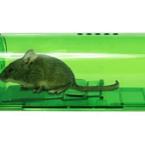 Best Mouse Traps of 2021