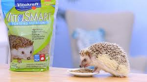 Best Hedgehog Food of 2021