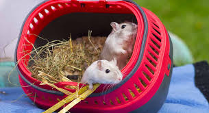 Best Gerbil Cages of 2021