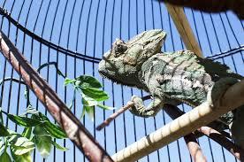 Best Chameleon Cages of 2021