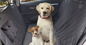 Best Dog Seat Covers of 2021