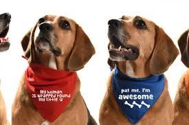 Best Dog Bandanas of 2021