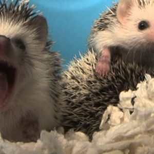 Best Hedgehogs Litter of 2021