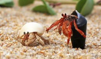 Best Heater For Hermit Crabs of 2021
