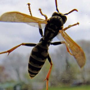 Best Wasp Traps of 2021