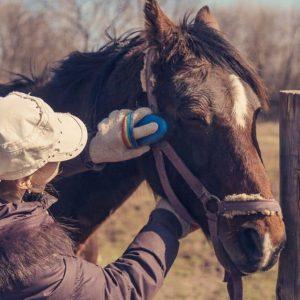 Best Horse Grooming Kits of 2021