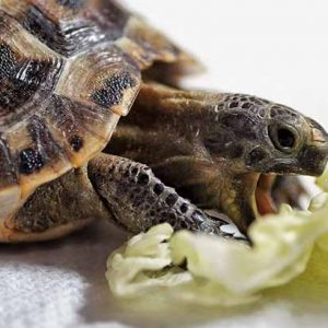 Best Turtle Foods