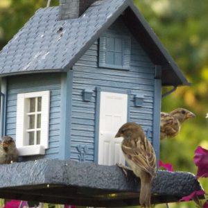 Best Bird Houses of 2021
