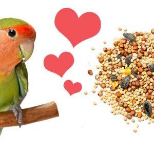 Best Bird Seed of 2021