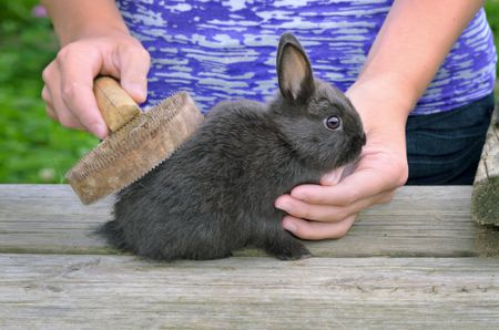 Best Grooming Brushes For Rabbits in 2021