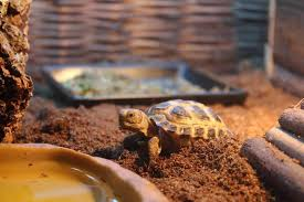 Best Tortoise Enclosure of 2021