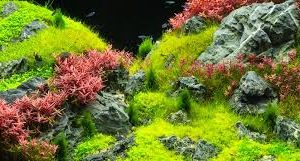 aquarium carpet plant