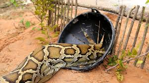 Best Snake Traps of 2021