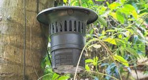 Best Mosquito Traps of 2021