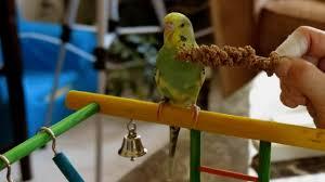 Best Parakeet Toys of 2021