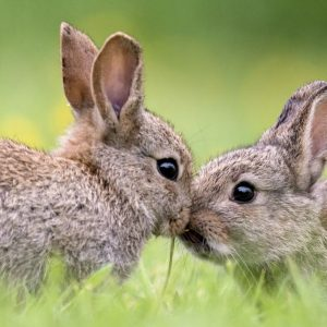 Best Rabbit Repellents